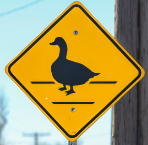 Duck Crossing Warning Sign Up Close